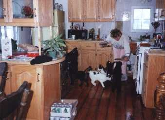 Kitchen Cabinites.jpg - 12363 Bytes